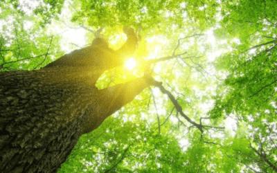 Ahorro energético y gestión de residuos, claves en la sostenibilidad de las ciudades